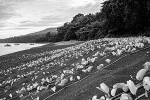 Lava zand op Sulawesi