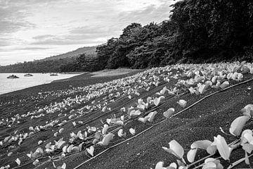 Lavasand auf Sulawesi