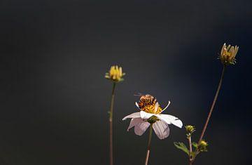 Blumen und Biene von Petro Luft
