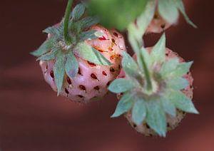 Weisse Erdbeeren