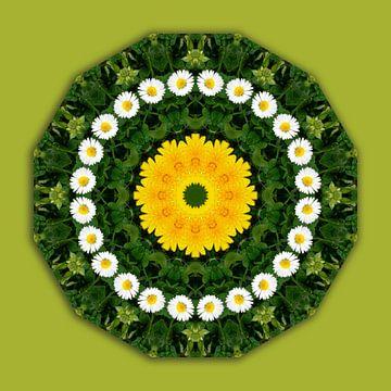 Blüten-Mandala, Gänseblümchen, Klee u. Löwenzahn van Barbara Hilmer-Schroeer
