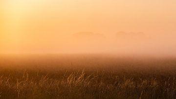 Helmgras in het ochtendlicht van Percy's fotografie