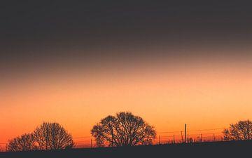 Drie struiken bij zonsondergang van Thomas Procek