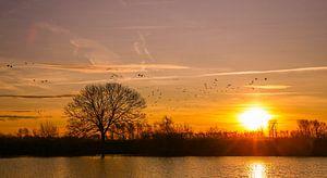 Sonnenaufgangs-Biesbosch bei Lage Zwaluwe von Diana van Geel
