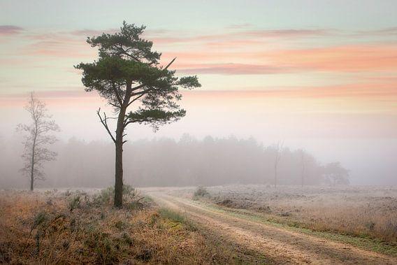Naaldboom in winters mistig landschap