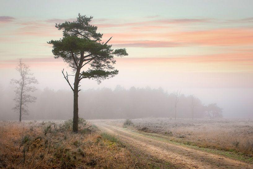 Naaldboom in winters mistig landschap van Peter Bolman