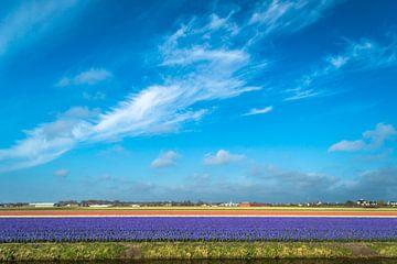 Bollenvelden met blauwe lucht van Richard Steenvoorden