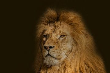 Lion, mâle, Panthera leo sur Gert Hilbink