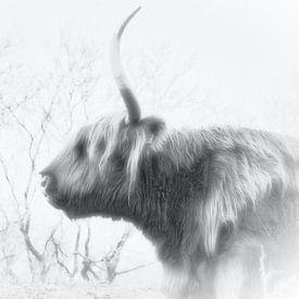 Een Schotse hooglander, zwart/wit van Wendy Tellier - Vastenhouw