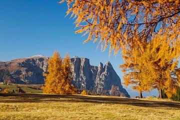 Goldgelb läßt der Herbst alljährlich die Seiser Alm erstrahlen. von Rudolf Brandstätter