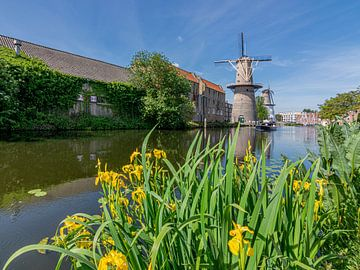 Windmolen in Schiedam, Nederland van Kok and Kok