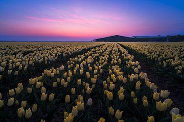 champ de tulipes au lever du soleil sur Rick Kloekke