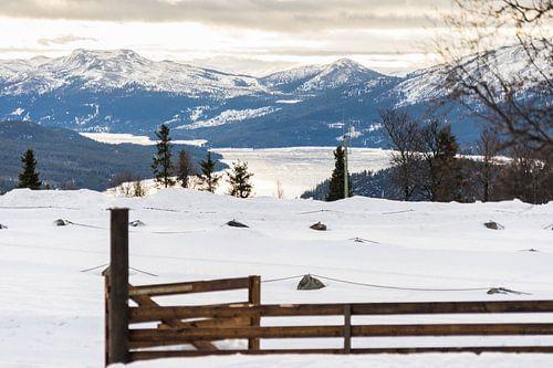 Landschap fjord Noorwegen van