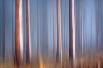 Ein Bewegungsbild aus einem Kiefernwald im Nebel. von Jeroen Lagerwerf