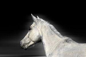 Cheval blanc sur Ruxandra Proksch