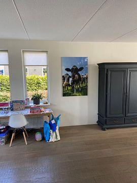 Kundenfoto: Gruppe von Kühen in die Linse von Sjoerd van der Wal