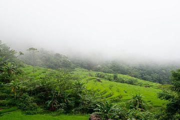 Reisfelder im Nebel in Pu Luong, Vietnam von Ellis Peeters