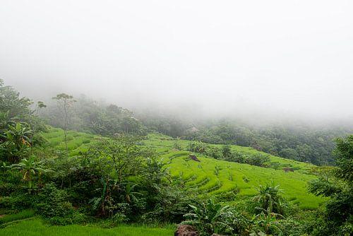 Rijstvelden in de mist in Pu Luong, Vietnam