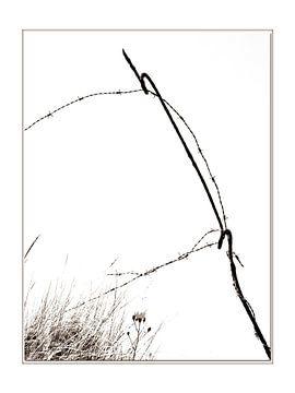 Oude prikkeldraad. van Wilfred Roelofs
