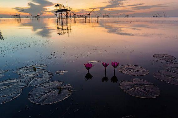 Lotus bloemen in meer in Phattalung van Johan Zwarthoed