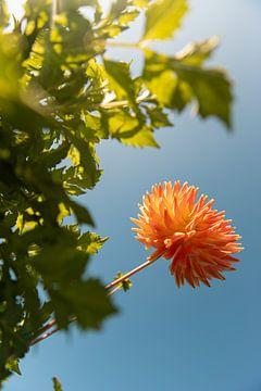 Orange in der Luft von Yana Spiridonova
