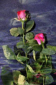 Rode rozen in het water van Christine Nöhmeier