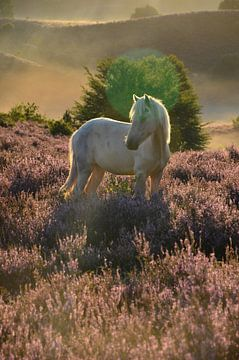 Paard in de Posbank van Hans Peter Debets