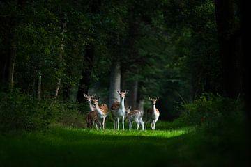 Märchenhafte Hirsch-Familie von Jouke Wijnstra Fotografie