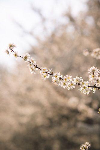 Hallo voorjaar