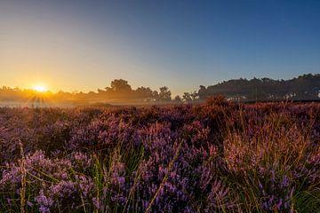 Paarse heide met zonsopkomst van Paul Weekers Fotografie