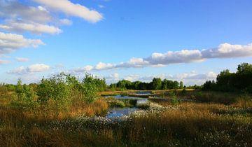 Natuurgebied Bargerveen van Cor de Jong Fotografie