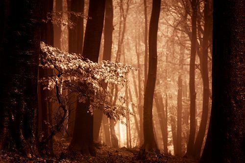 Mistig bos met herftsbladeren (bruintinten)