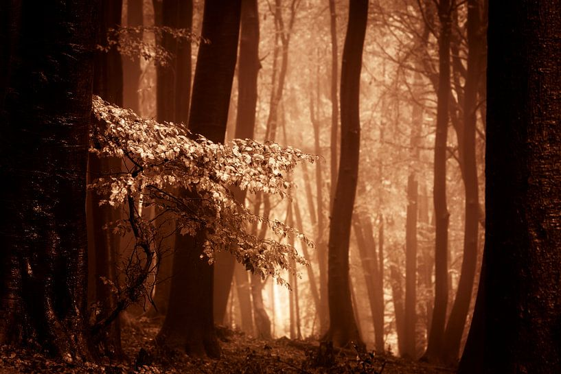 Mistig bos met herftsbladeren (bruintinten) van Mark Scheper