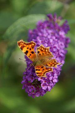 Vlinder op een vlinderstruik van Lotte Veldt