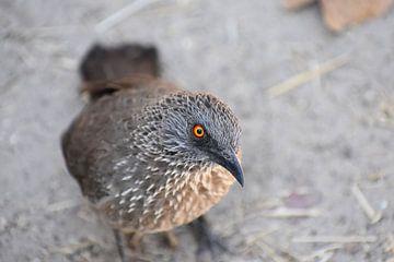 Vogel in Botswana van