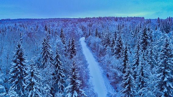 Snow forest in the early evening