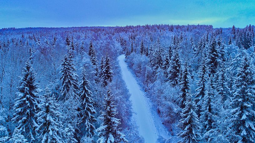 Snow forest in the early evening van Fields Sweden