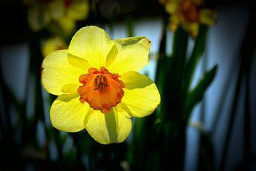 Narcis I van Bert Vester