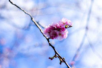 lente von Bertrik Hakvoort