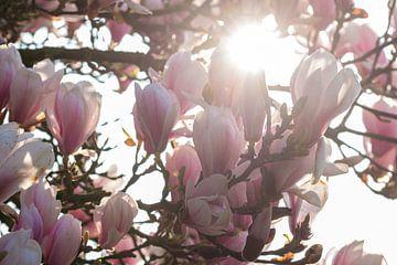 Magnolienbaum von Elbertsen Fotografie