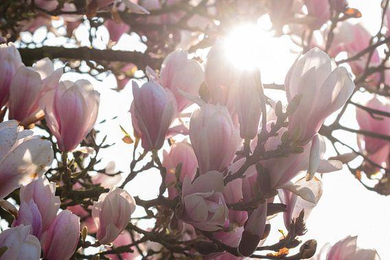 Magnolia boom van Elbertsen Fotografie