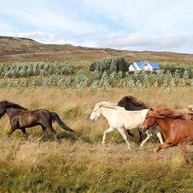 Rennende paarden in IJsland van Map of Joy