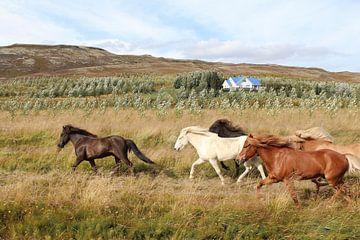 Laufende Pferde in Island von Map of Joy