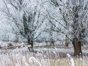 Sterretjes in de bomen van Anneriek de Jong