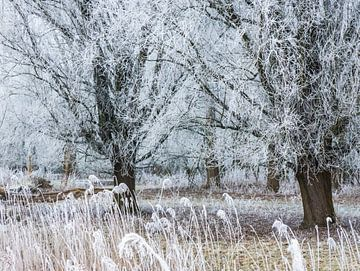 Sterretjes in de bomen von Anneriek de Jong