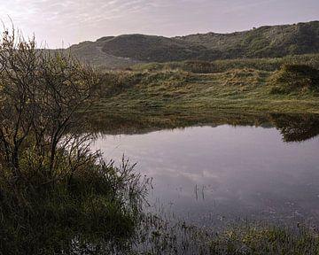 Frosch-Pool zwischen den Dünen von Bastiaan Schuit