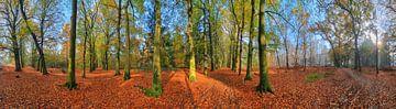 360 graden panorama herfstbos van Dennis van de Water