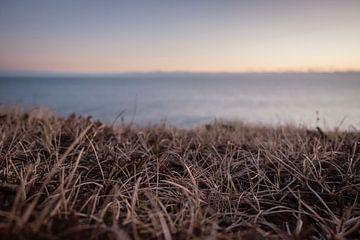 Gras bei Sonnenuntergang von Annika Koole