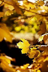 Zonsondergang bos herfst van