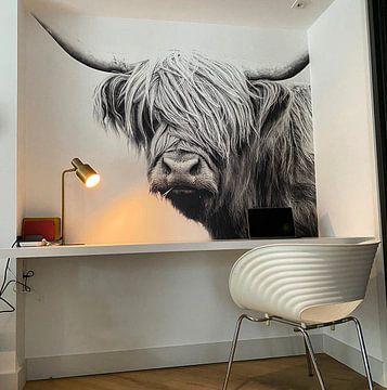 Klantfoto: Schotse hooglander van Felix Brönnimann